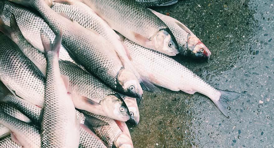 pescado-al-horno-temperatura